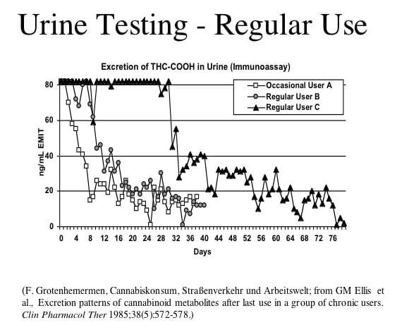 Marijuana Drug Test Detection Times | California NORML